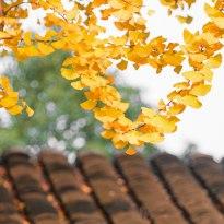 秋冬的叶子