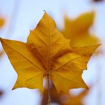 初冬的叶子