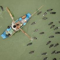 渔夫行舟河道 鸬鹚相伴构成和谐画卷