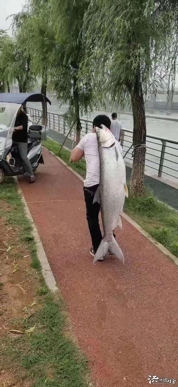 朋友打電話說diao了一條魚