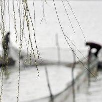 攝影比賽 洪澤湖畔人勤春早
