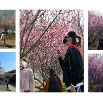組照五幅、《母女三游春》